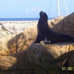 On chassait autrefois quantité de lions de mer pour leur petit lard et leur peau et parce que le