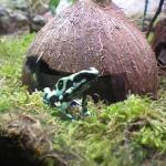 grenouille exotique toxique