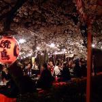 Gion Cherry blossom festval