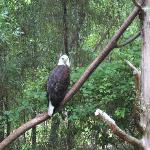 Photo de Tallahassee Museum