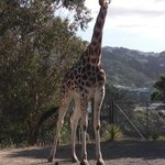Wellington Zoo Photo