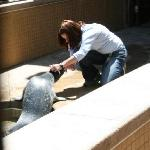 Feedings for the seals can be enjoyable for kids.