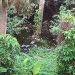Vista desde nuestra habitación: Un manglar pestilente y repleto de basura.