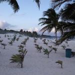 Bilde fra Acuatic Tulum