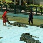 Samui Crocodile Farm Photo