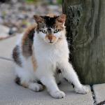 Cats Love The Harborside!