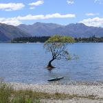 Wanaka Photo