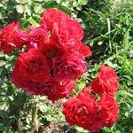 The Botanical Garden (Gradina Botanica) Photo