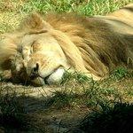 Woodland Park Zoo Image
