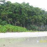 the forest the sand da BEACH