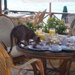 Cats at breakfast