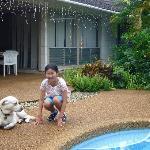 Pool and dog