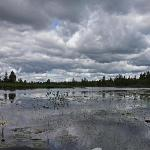 Storm Clouds - Lilly Pads = Moose Bait