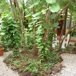 Lush tropical plants
