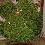 Lots of different animal topiary on the grounds