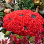 A flowery lady bug at the Bellagio