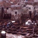 Tannery pits
