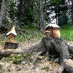 funghi artistici nel bosco