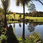 The pond 2