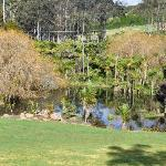 The pond 3