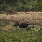 Elephant near the Watering Hole