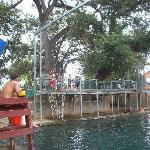 Rope Swing at Landa Park