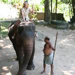 Abentuer Elefant