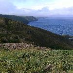 The Coastal Path - next to Trevigue