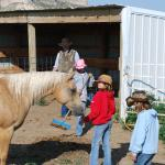 taking care of the horses