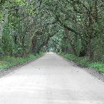 Road to Botany Bay