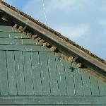 Birdnests on house