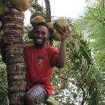 One of the staff climbs up to get a coconut for our daughter