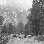 deers sous grand teton