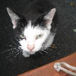 neighbour cat from Pier View House