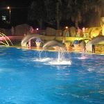 Dolphins at the night show in Marinland
