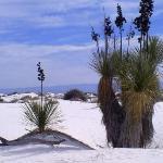 Foto de White Sands Missle Range Museum