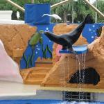Merileijona show. Miami Seaquarium.