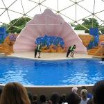 Merileijona show. Miami Sea Aquarium.