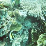 Reef Experience ภาพถ่าย