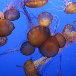 Love the jellies