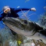 Rare 20 ft. barracuda in Belize.