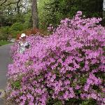 springtime in Ashville