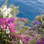 flowers and sea taken from seat on terrace