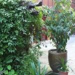 garden in hostel