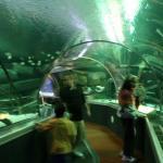 Underwater Adventure at mall of America