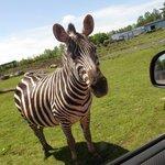 Parc Safari Photo