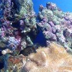Weymouth Sea LifeAdventure Park and Marine Sanctuary