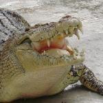 Crocodile Adventureland Langkawi Photo