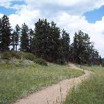Petrified Forest trail