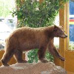 The friendly Alaskan bear